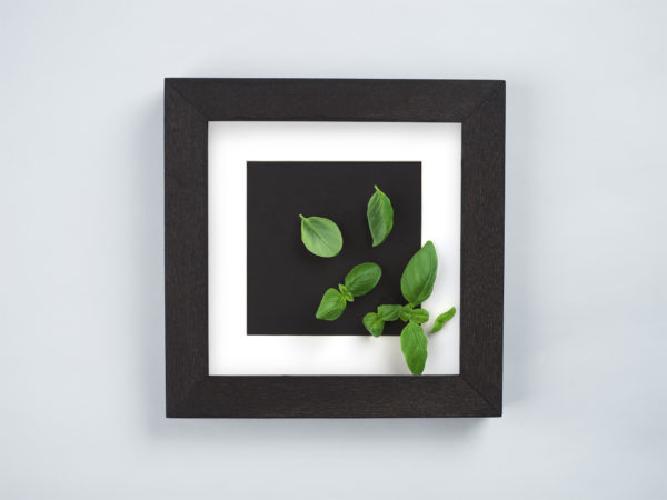 basil frame