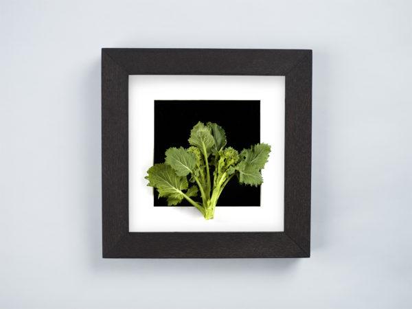 turnip greens frame