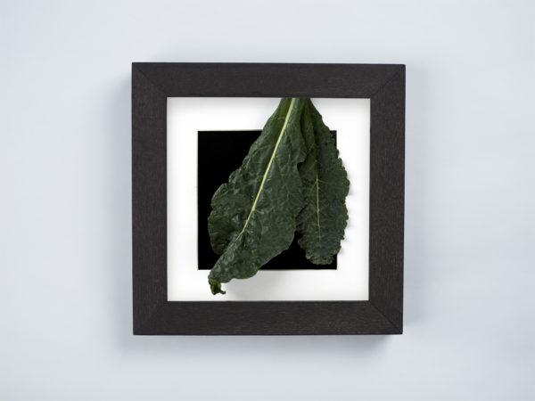 black cabbage frame